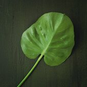 An exotic leaf