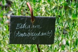 Fresh tarragon in the garden with sign (antioxidant)