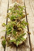 Beech twigs with flowers and leaves on a wooden serving platter