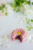 Wagashi shaped like a chrysanthemum flower