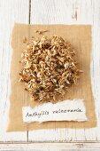 Kidney vetch (Anthyllis vulneraria), dried
