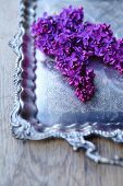 Purple lilac flower on a silver tray (close-up)