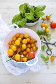 Yellow cherry tomatoes and basil