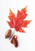 Pecan nuts and a maple leaf