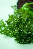 Fresh curly leaf parsley (close-up)