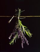 Sprigs of lavender and rosemary attached to the washing line