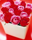 Gorgeous bouquet of pink and red roses