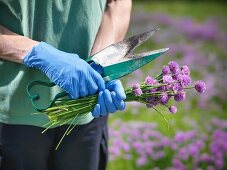 Worker holding fresh chives and scissors