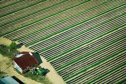 Farm lines