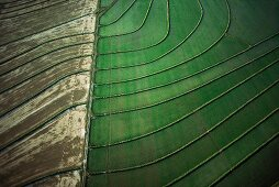 Dry & green patterned fields