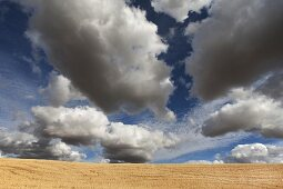 Golden Wheat Field Against Dramatic Clouds and Sky, Washington, USA