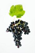 Shiraz grapes with a vine leaf