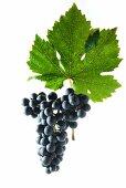 Cabernet dorsa grapes with a vine leaf