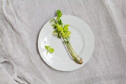 Celery and coarse salt on white porcelain plate