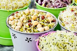 Various bean sprouts in containers