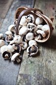 Field mushrooms falling out of a wooden basket