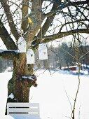 Bird nesting boxes hanging in tree in snowy garden