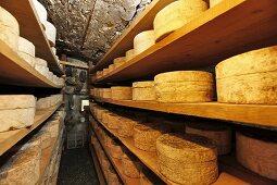 Bleu de Termignon (French blue cheese) in a ripening cellar