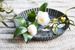 White gardenia flowers and a sprig of mistletoe in a small tart tin on a knitted surface