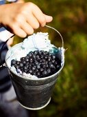 A boy holding a bucket of freshly picked blueberries