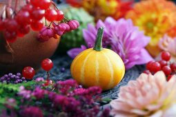 And ornamental squash between dahlias and berries