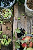 Autumnal still-life arrangement with foraged acorns and apple tree branch