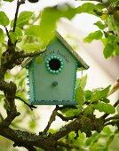 Nesting box in tree in garden