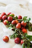 A sprig of freshly picked red plums on a white cloth