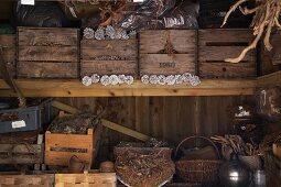 Alte Holzkisten mit Tannenzapfen und Körben auf Regal im Lager