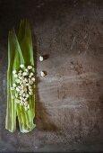 Corn kernels on corn leaves