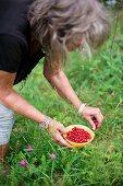 Woman picking wild strawberries