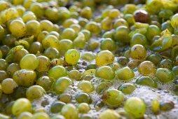 Grape mash