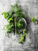 Fresh herbs with a plate on a grey suface