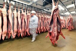 Sides of pork in cold storage at a slaughterhouse