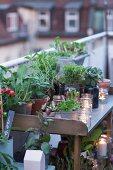 Pflanztisch auf Dachterrasse im Abendlicht dekoriert mit Pflanzen und Windlichtern