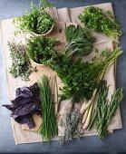 An arrangement of various fresh herbs
