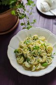Ruote pasta with ricotta and fresh herbs
