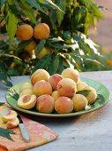 Frisch gepflückte Pfirsiche auf Schale