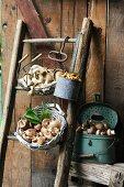Verschiedene Sorten frisch geernteter Pilze in Körben & Gefässen