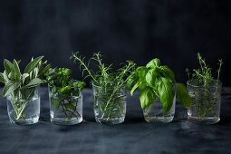 Fresh herbs in glasses on a dark surface