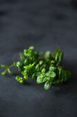 Fresh mint on a dark surface