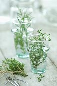 Fresh thyme and rosemary in glasses of water
