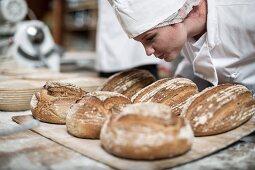 Baker sniffing at freshly baked bread