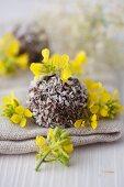 Coconut pralines with rape flowers