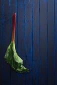 Stick of rhubarb with leaf