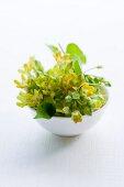 Flowering pakalana vine in a bowl