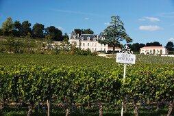 Weinberg mit Château Fonplegade, Bordeaux, Frankreich