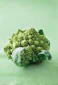 Romanesco broccoli on a green surface