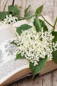 Elderflowers on an old German gardening book