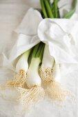 Frühlingszwiebeln mit weißem Tuch